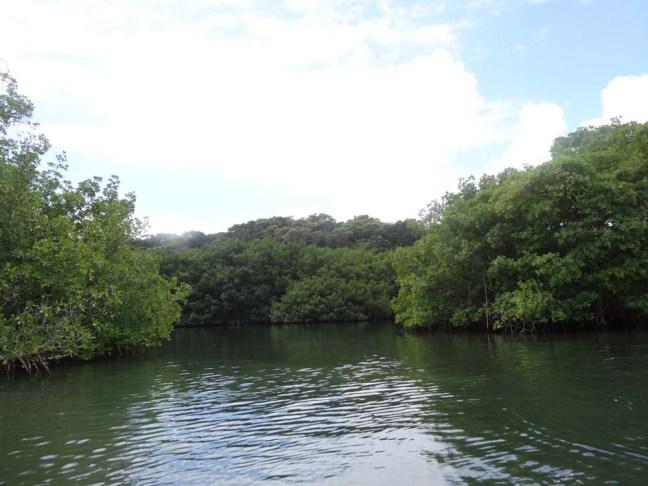 mangrove, Vieux Bourg, Guadeloupe, Vivre sur une île...pour une citadine